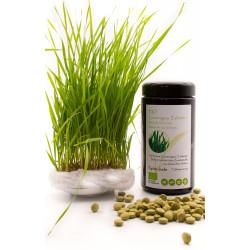 Spira Verde BIO Gerstengras - Tabletten